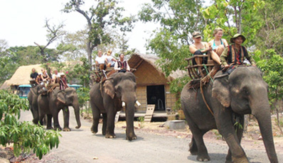 Da Lat Cable Car & Elephant Riding
