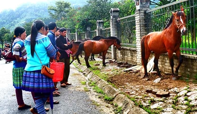 Sapa - Bac Ha Adventure | by Private Car from Hanoi